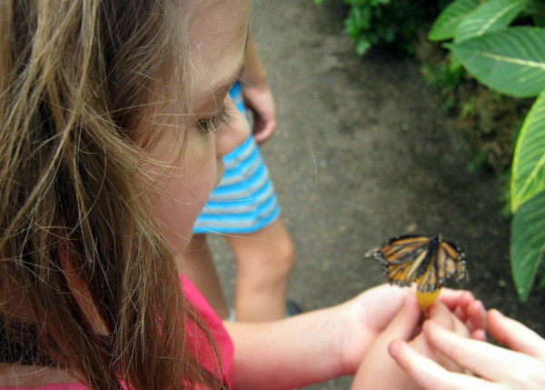 Phipps Science Education_ Butterflies (3)