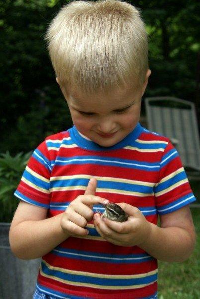 bird catcher - auguste steinwald 2