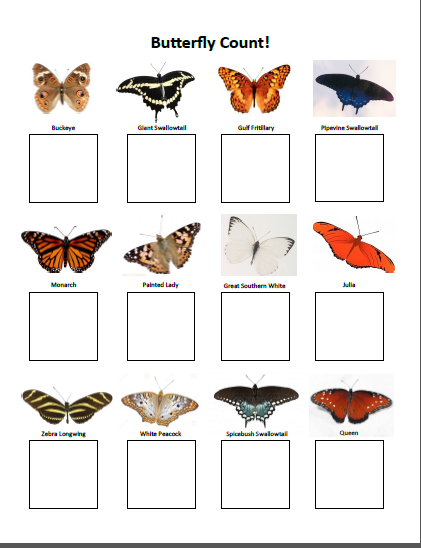 Butterfly Scavenger Hunt